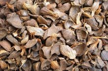 PKS PALM KERNEL SHELL FOR POWER PLAN GOOD PRICE