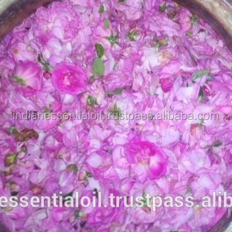 Pure Organic and Natural Steam Distilled Rose Water