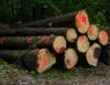 White Oak logs & Red oak Logs