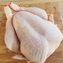 Halal Frozen Whole Chicken and Chicken parts From Brazil