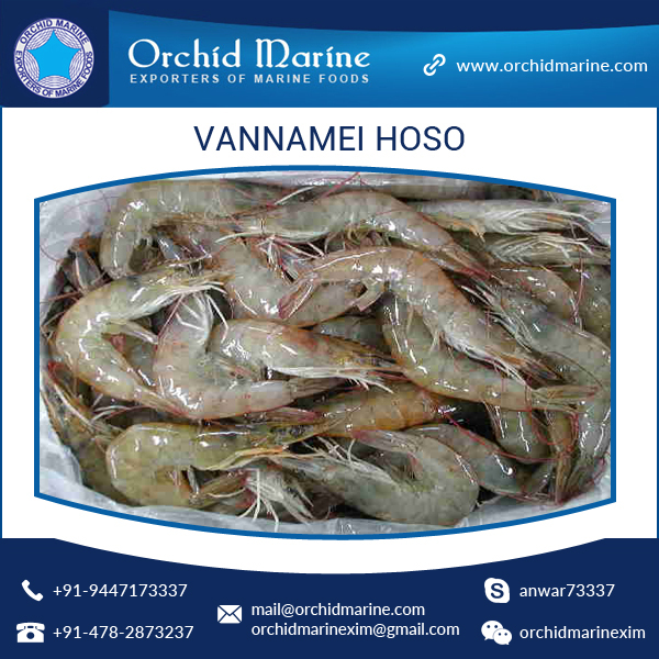 Frozen Vannamei White Shrimp HOSO for Wholesale Export