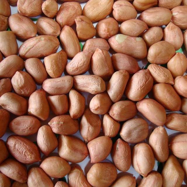100 % Organic Unprocessed Raw Groundnuts | Peanuts (Shelled/Unshelled) for Oil Extraction | Peanut Oil & Cake | Sudan