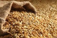 Barley Seeds/Animal feed barley/bulk barley grains for sale