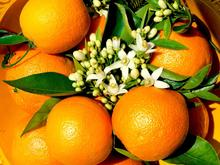 Orange from Turkey / Mediterranea