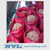 EXPORTING DRIED BETEL NUT WITH THE BEST PRICE