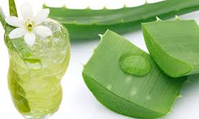 Fresh Aloe vera in 350ml Pet Bottle from VietNam's Farm
