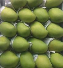 VIETNAMESE FRESH MANGOES - 2018 CROP - BIG SALE
