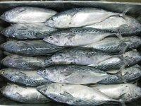 IQF sardine fish frozen seafood wholesale