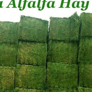 Top Quality Alfalfa Hay for Animal Feeding at very good price