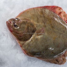 Fresh Frozen Flounder Fish