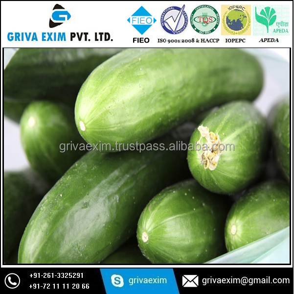 Long Cucumber organic green vegetables and fruits cheap fresh cucumber