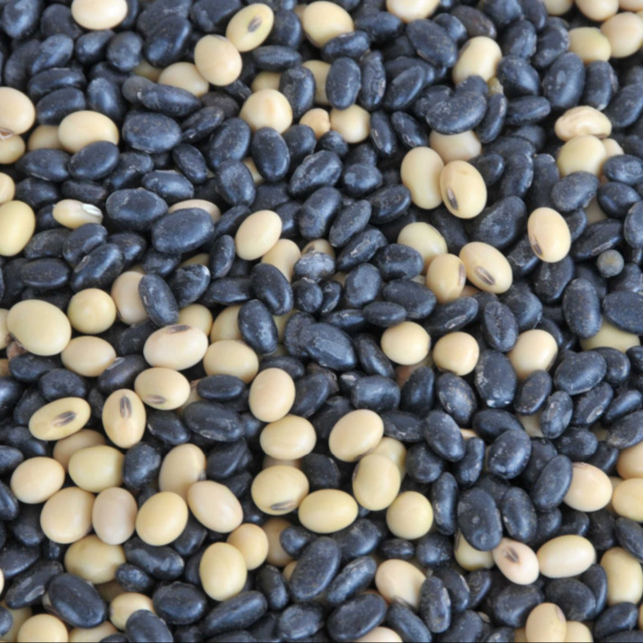 Big Black bean/black soya bean/black soybean with green kernel for sale