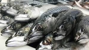 affordable price selling Pacific chub mackerel fish from Deep sea ocean