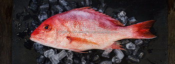 RED SNAPPER WHOLE & GUTTED/Frozen Red Snapper (Pacific Rock Fish)/Frozen Red Snapper
