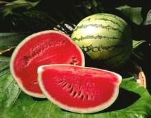 supplier fruit fresh water melon with high quality