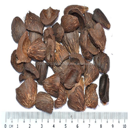 Palm Kernel Shell supplier wholesale best price