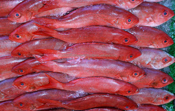 Red Snapper ( Bohar)/Red snapper whole round gutted/High Quality Seafood Fish Frozen Red Snapper