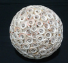 Seashell Balls Made of Luhuanos Shell size 8inches Philippine Handicrafts