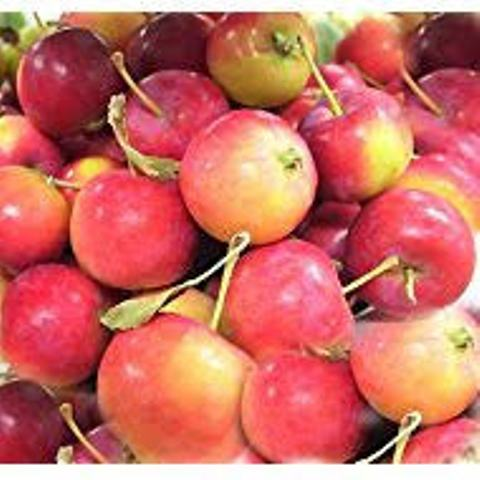 Fresh fruits Red star apple with good quality for sale..