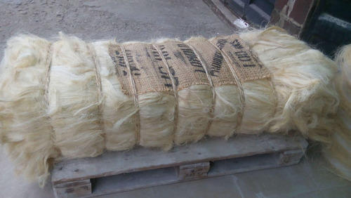 Natural White Ug Sisal Fiber Cheaper than Kenyan/ Tanzanian Fiber