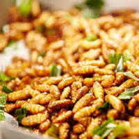 Frozen Silkworm Chrysalis Food for wholesaler at given prices.