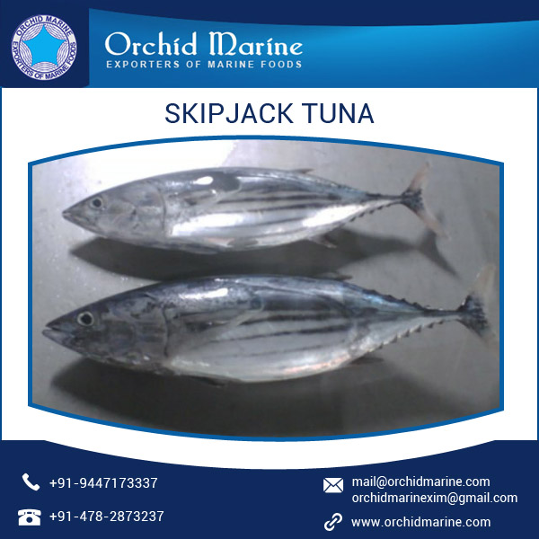 100% Natural and Healthy Skipjack Tuna Whole Round Sea Food for Bulk Supply