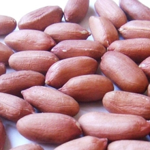 Raw Peanut kernels / blanched peanuts for Sale