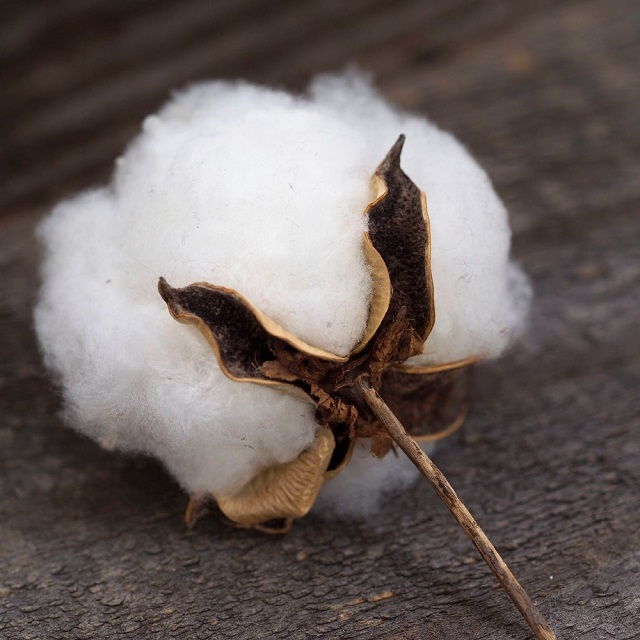 Raw Cotton 2017 Crop for sale