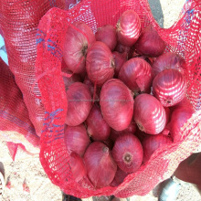 Fresh Red onion Exporter From India