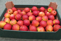 Fresh Fuji and Gala Apple, Available