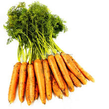 Ecocert Certified Organic Bulk Manufacture Carrot Seed Essential Oil India