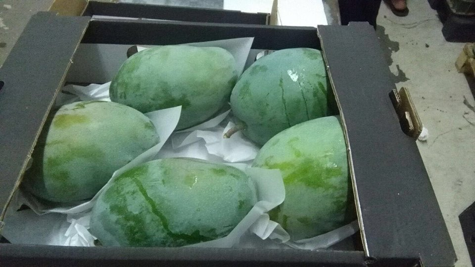 Egyptian Fresh Mango Naomi 2017