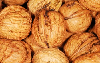 Top Quanlity, Wholesale Walnuts In Shell Price