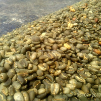 Arabica Coffee Greenbean Java Preanger