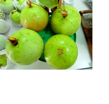 Hot selling Fresh Apple Red Star Apple Certified Quality By SGS HACCP, ISO, GMP