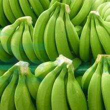 GREEN CAVENDISH BANANAS FOR SALE