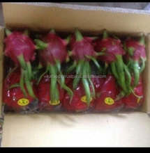 SUPPLY FRESH DRAGON FRUIT WITH PREMIUM QUALITY