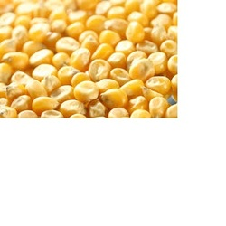 Hot sales Corn gluten meal / corn protein yellow powder / animal feed READY FOR EXPORT