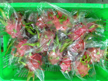 VIETNAM FRESH FRUIT- DRAGON FRUIT VIETNAM- WHITE/ RED FLESH- SKYPE: phucmylong