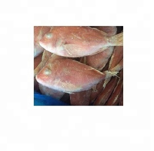 Frozen Red Snapper ,Fresh and Frozen Red Snapper ,Frozen Red Snapper Fillet Skin On