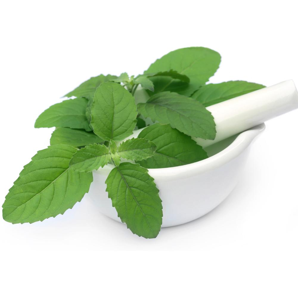 basil powder supplier