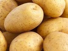Premium Quality Farm Fresh Potatoes in stock for sale