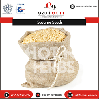 Multi Nutritive Sesame Seeds at Wholesale Price