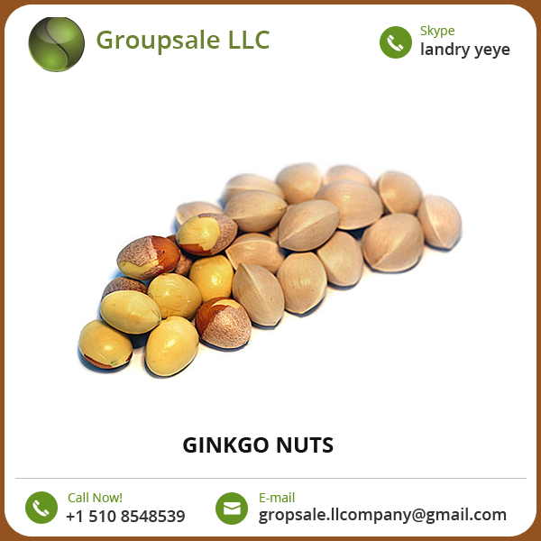 Good Quality Ginkgo Nuts for Sale