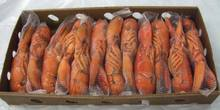 WHOLE FROZEN LOBSTER / FROZEN LOBSTER TAIL / FRESH LIVE LOBSTER