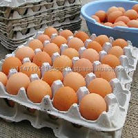 Fresh Egg Available