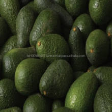 Fresh Hass and Fuerte Avocado For Sale