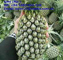 FRESH QUEEN PINEAPPLE/ FRESH CAYENNE PINEAPPLE FROM VIETNAM (AMY 84 1683 655 628)