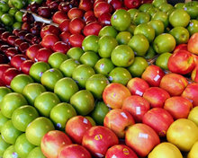 Fresh Fuji Apple with Best Price