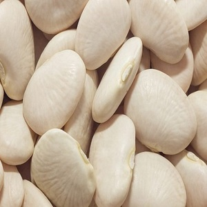 Large White Lima Bean